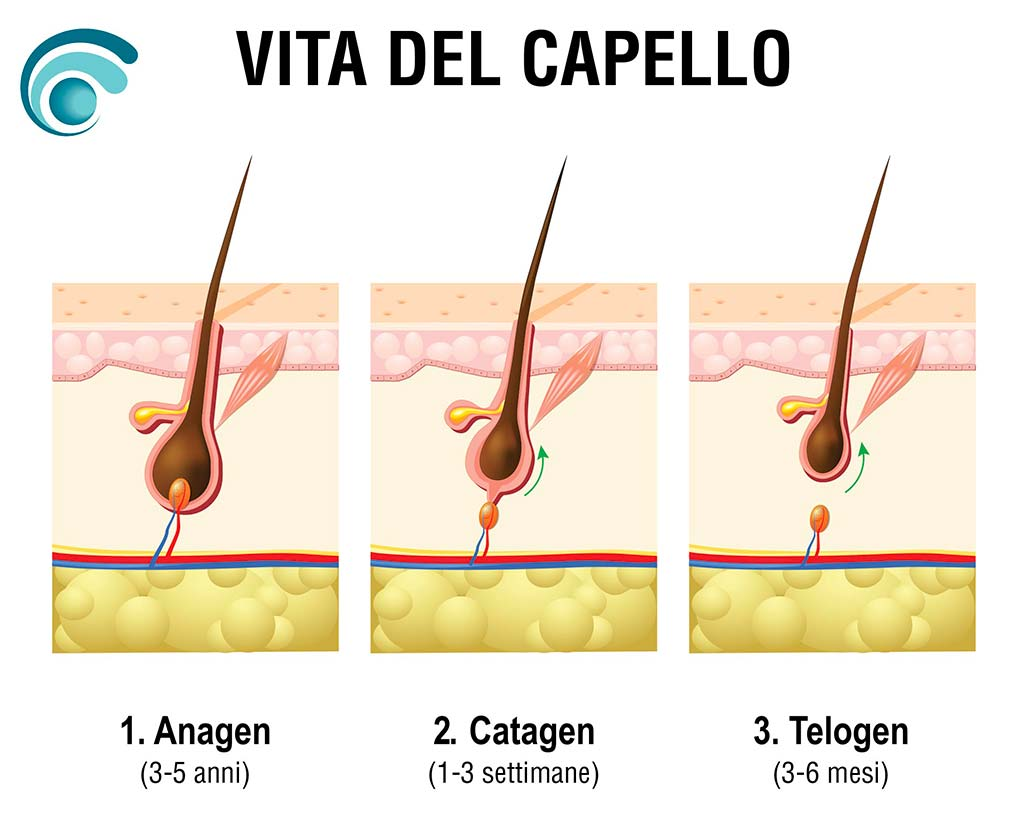 Fasi della vita del capello | TRICODERMSOLUTIONS